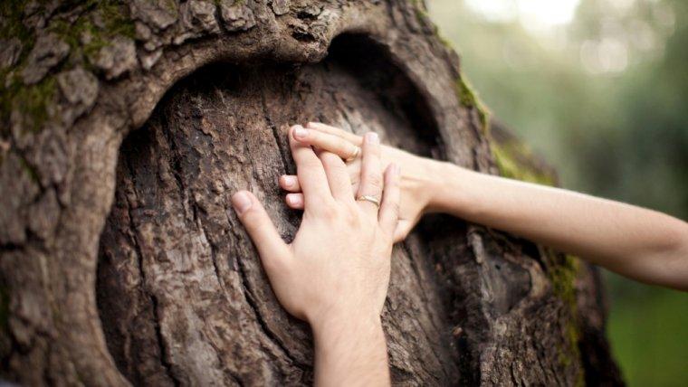 Starych drzew się nie przesadza