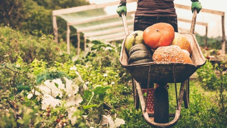 Eko-afery, czyli fakty i mity o ekologicznej żywności