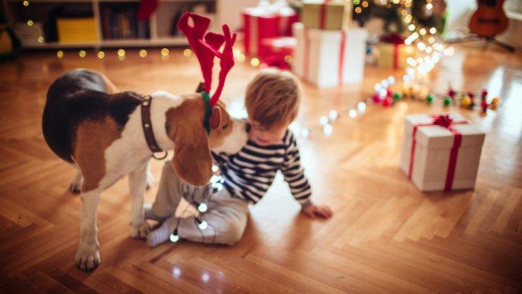 Bożonarodzeniowy świr.