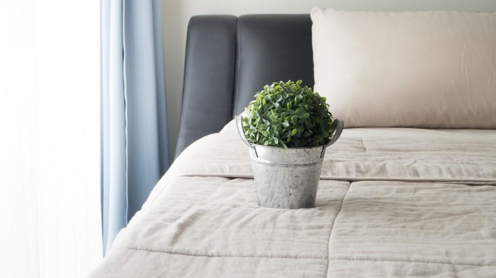 Kwiaty W Sypialni 10 Gatunków Roślin Wpływających