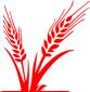 footer-grain